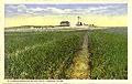 bermuda onion field, laredo, texas